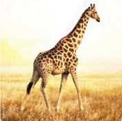 100 Pics Quis - Animali 2